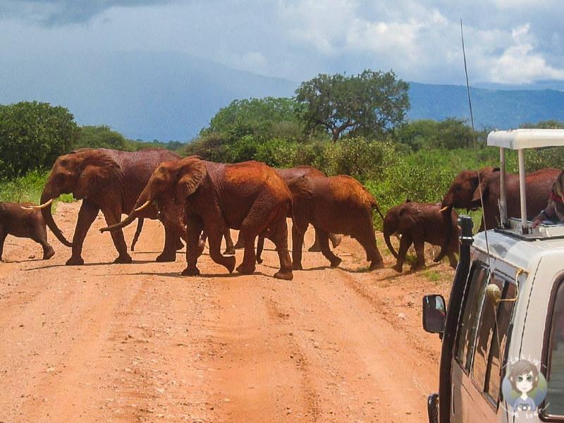 Elefanten beobachten im Tsavo National Park, Kenia