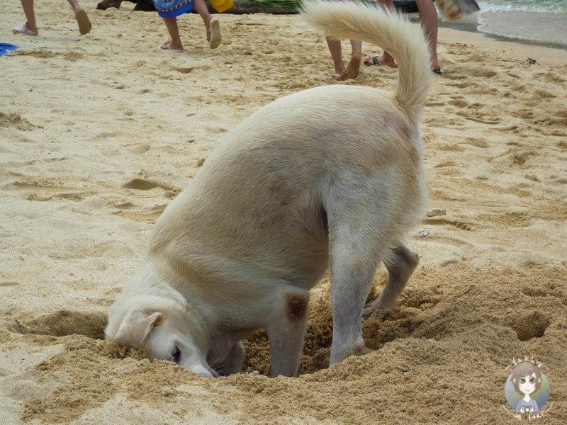 krabi willkommen in krabi und land unter in thailand takly on tour der reise und camping