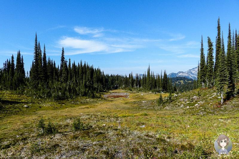 Die Natur im Mount Revelstoke National Park, Kanada