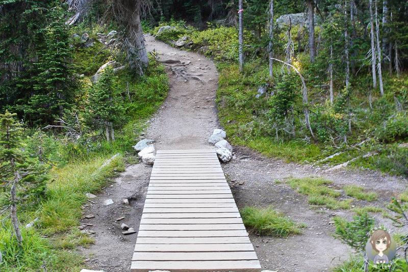 Ein Wanderweg im Mount Revelstoke Nationalpark, British Columbia, Canada