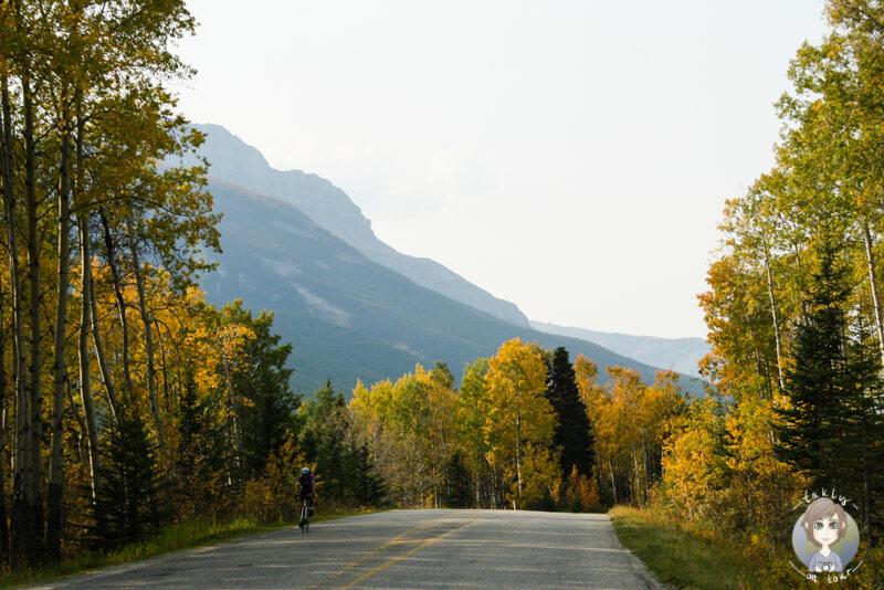 Der Bow Valley Parkway im Banff National Park, Kanada