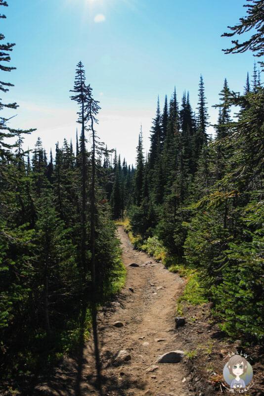 Wanderung im Mount Revelstoke National Park, BC, Kanada