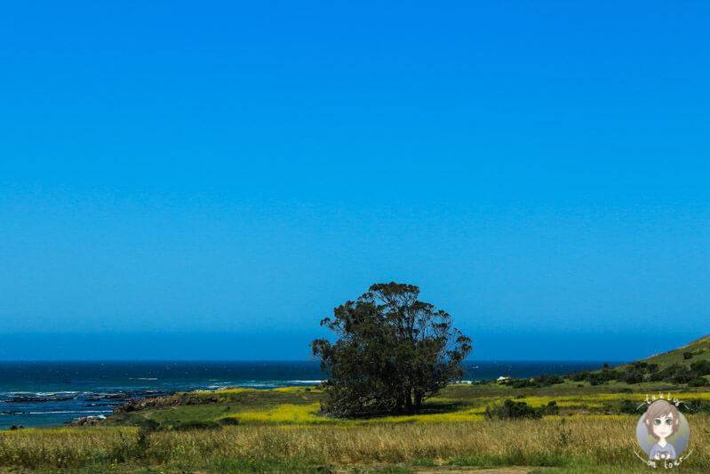 Ein Baum an der Küste von Kalifornien