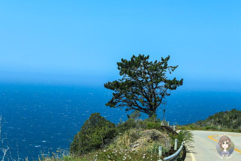 Ein einsamer Baum am Highway in Nordamerika