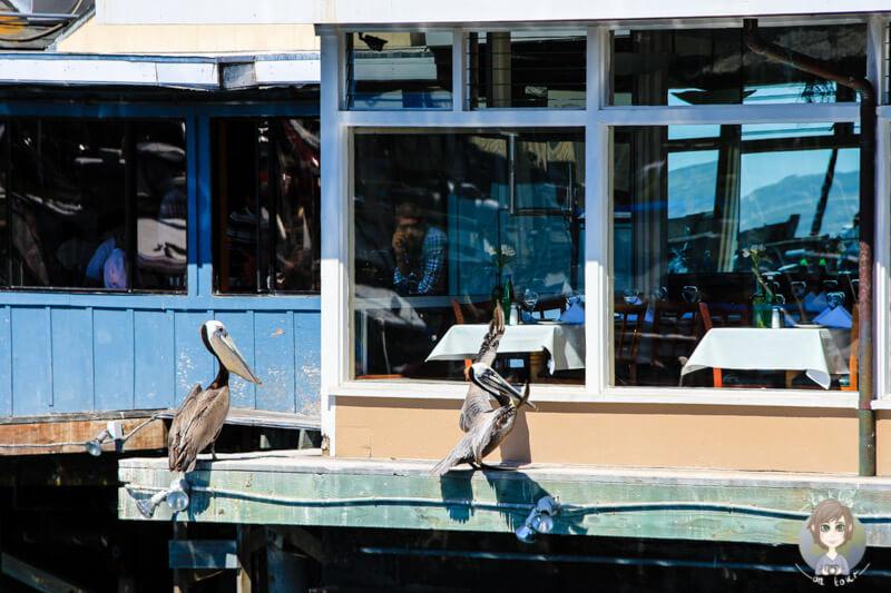 Monterey, Kalifornien (4)