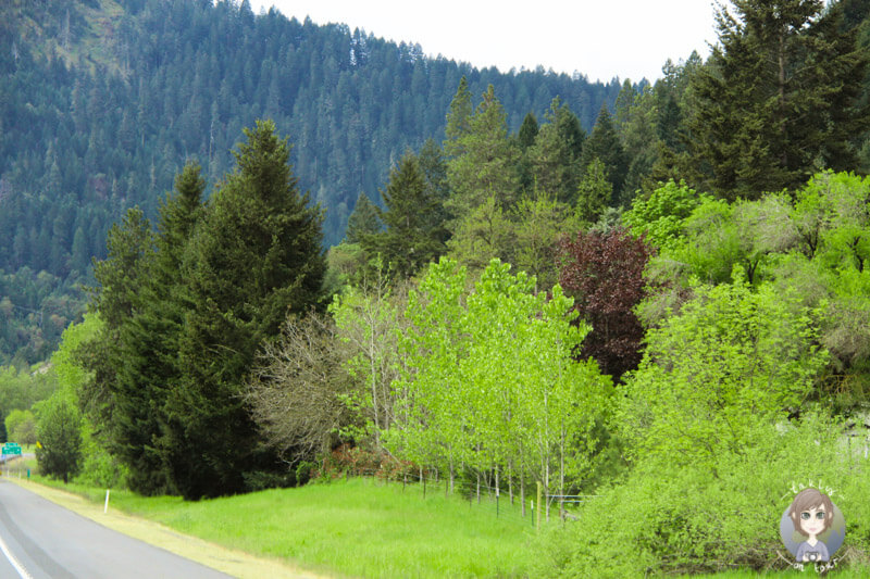 Natur in Oregon (3)