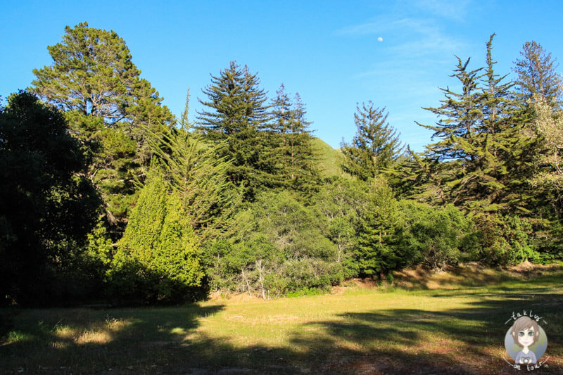 Pfeiffer Big Sur Campgrounds (4)