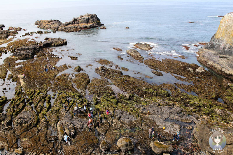 Tide Pools im Yaquina Head Natural Area, Oregon