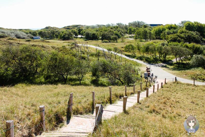 Weg auf die Aussichtsdüne von Norderney
