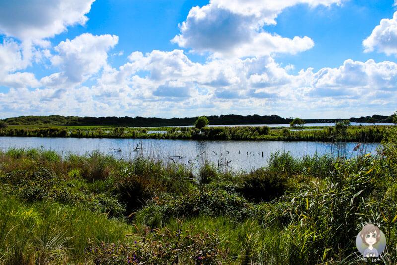 Vögelgezwitscher an der See