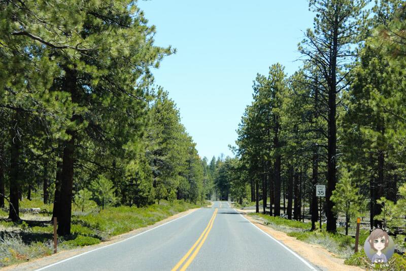 Fahrt durch den Bryce Canyon National Park