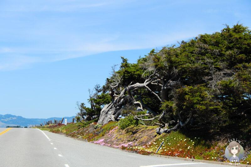 Highway 1 bis Mendocino (4)