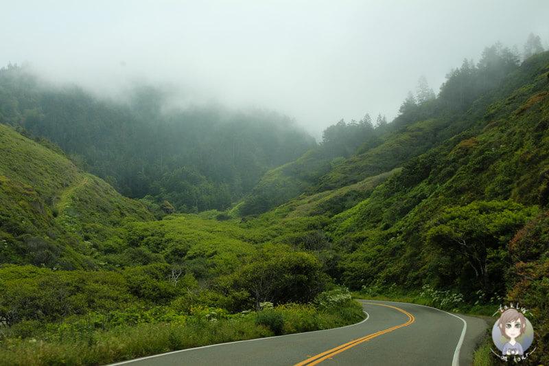 Nebel auf dem US-Highway 101