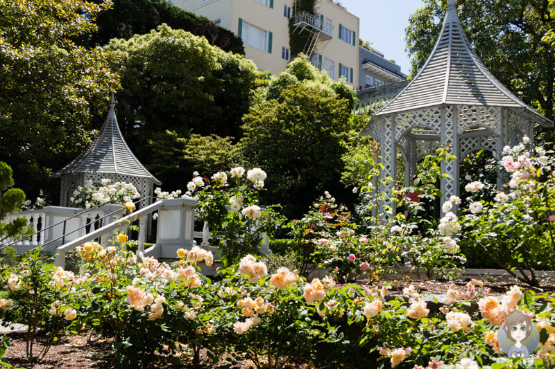 Rosengarten in San Francisco