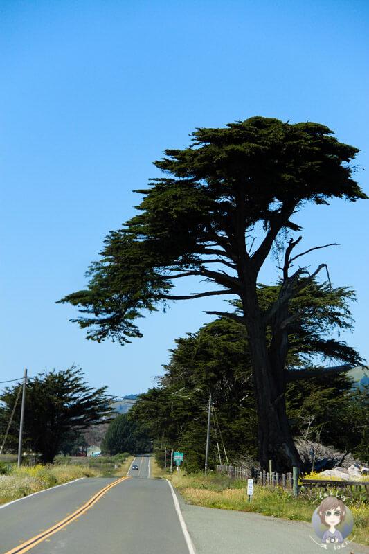 Route in Kalifornien (3)