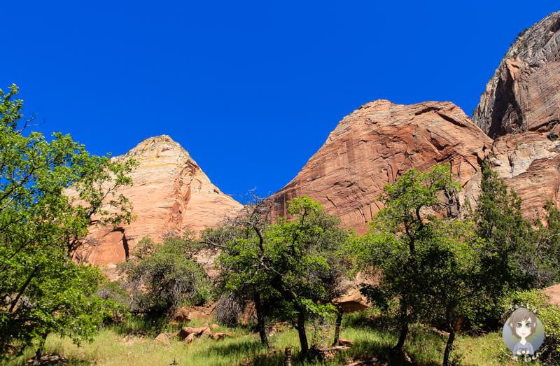 Zion Nationalpark (3)