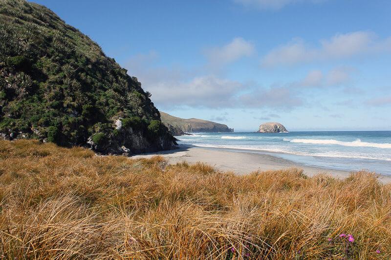 Ein Blick auf den Allans Beach mit Bergen im Hintergrund Neuseeland Reisetipps