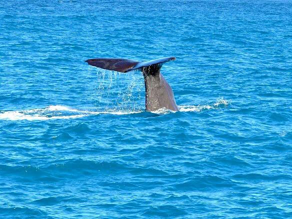Wale beobachten in Kaikoura Neuseeland Reisetipps von Travelontoast
