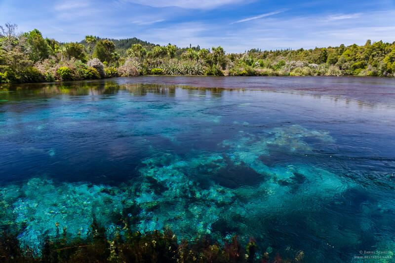 Blick auf die Pupu Springs im Abel Tasman National Park Neuseeland Reisetipps