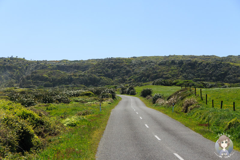 Fahrt zum Cape Foulwind