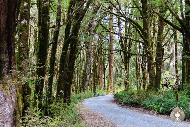 Cascade Creek Campingplatz, Fiordland Nationalpark (1)