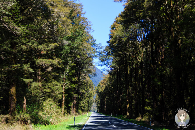 Fahrt durch den Wald Richtung Marble Hill Campsite