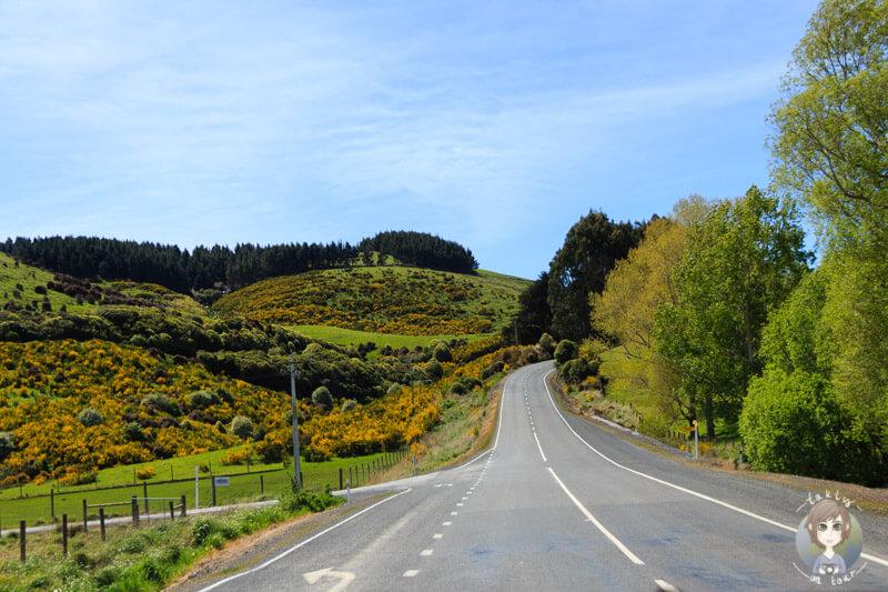 Fahrt zum Nugget Point, Otago (2)