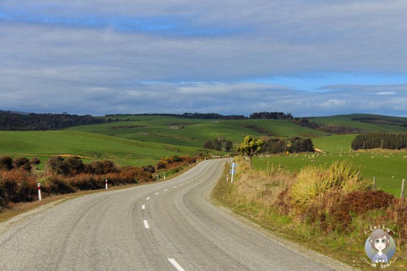 Landschaft pur in der Region Catlins, Neuseeland