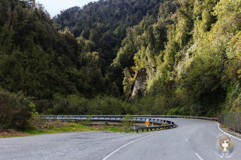 Fox Glacier Highway, Neuseeland (2)