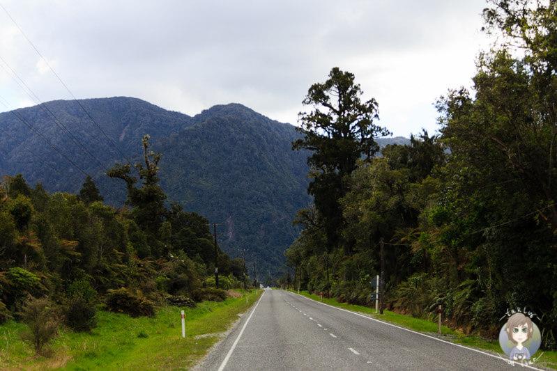 Fox Glacier Highway, West Coast, Neuseeland (1)