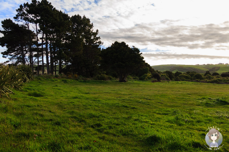 Freedom Camping Weir Beach, Neuseeland (2)