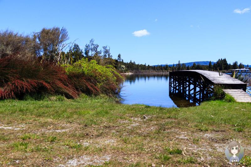 Freedom Camping an der Westcoast in Te Kinga, Neuseeland (2)