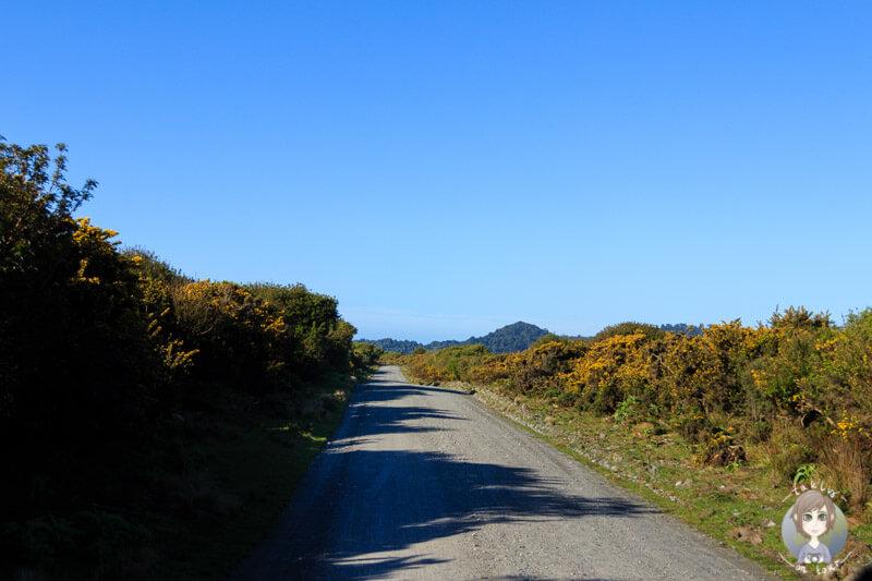 Straße zum Gillespies Beach DOC