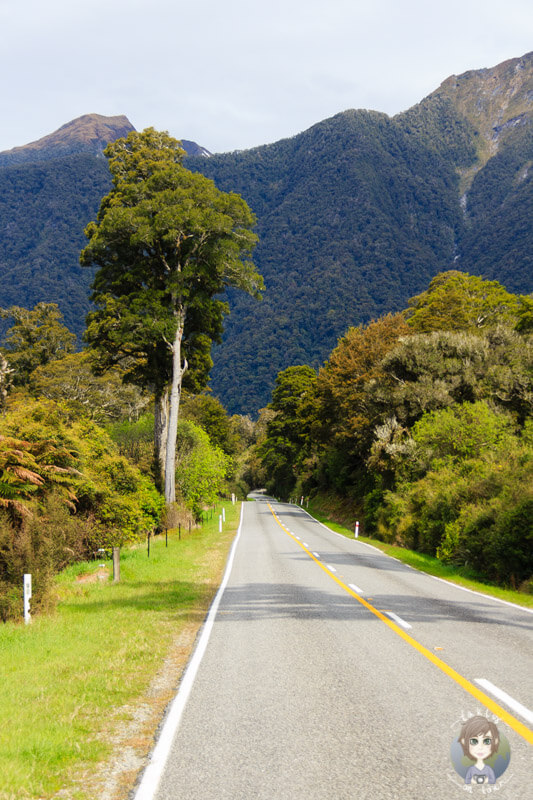Haast Highway, West Coast (3)
