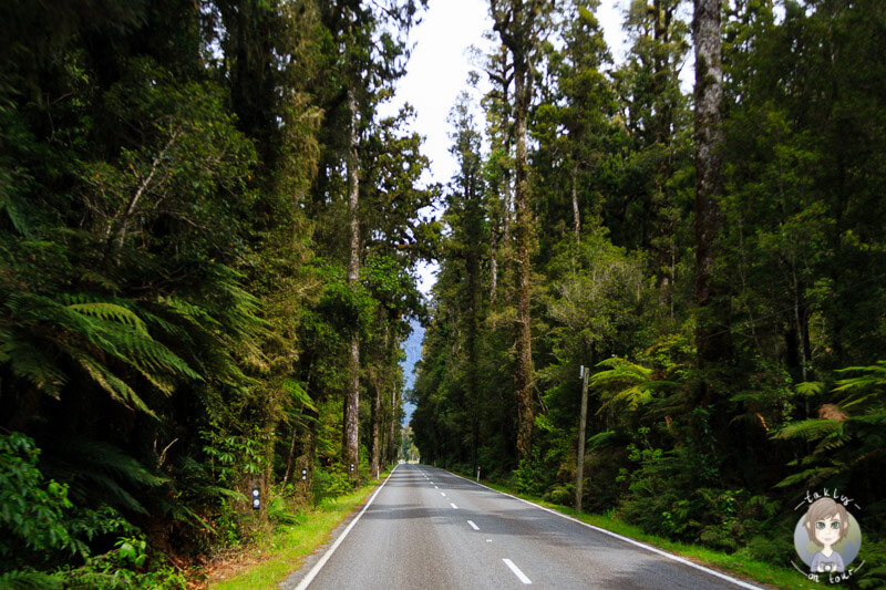 Regenwald am Haast Highway