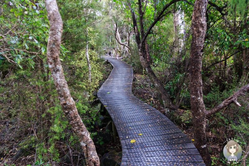Hawkes Lookout, Abel Tasman (2)