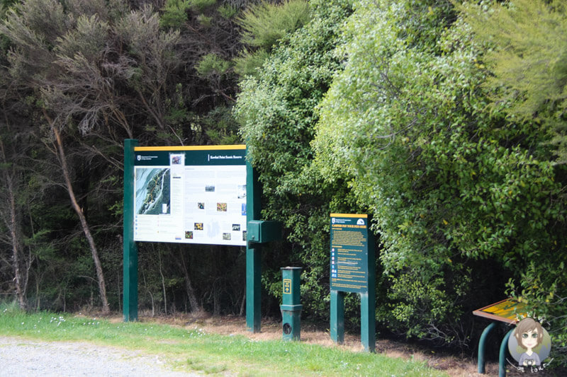 Kowhai Point DOC Campingplatz (3)