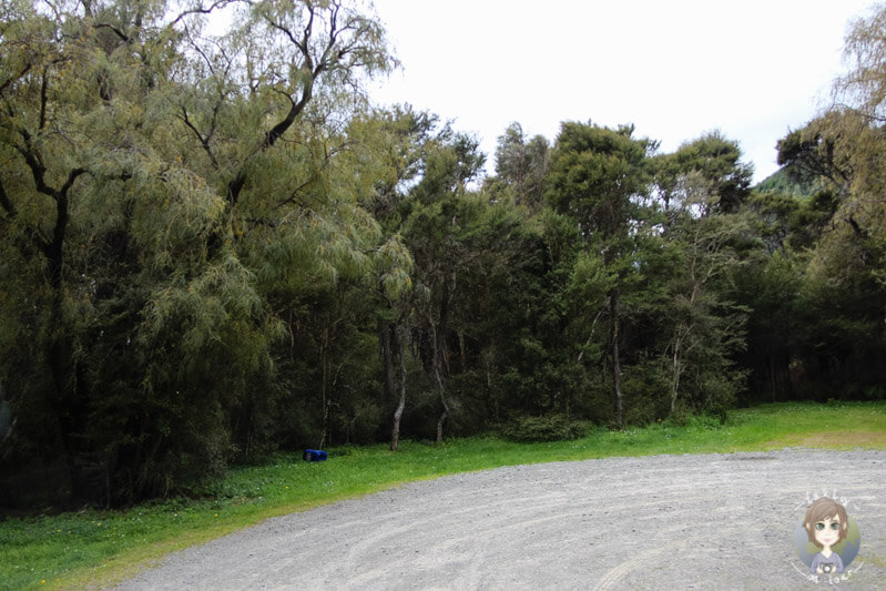 Kowhai Point DOC Campingplatz (6)