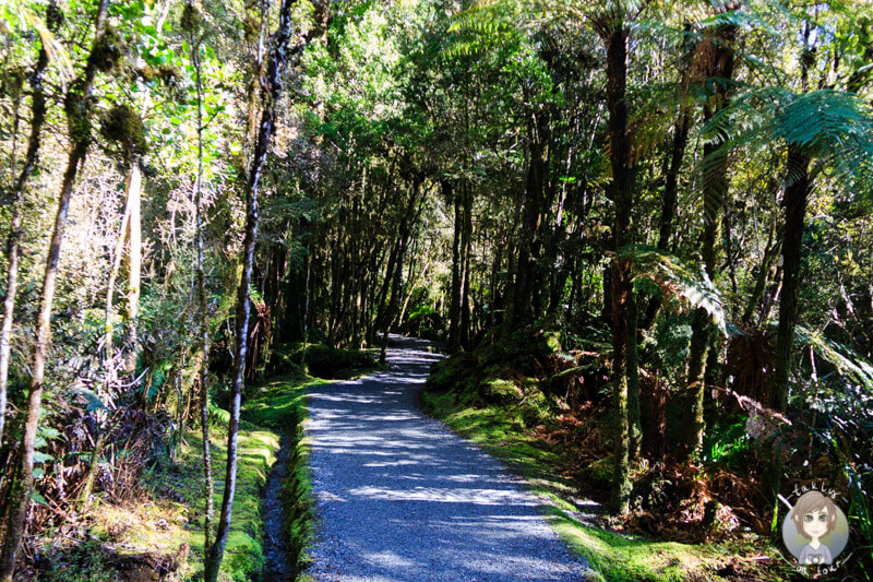 Lake Matheson Walk, West Coast