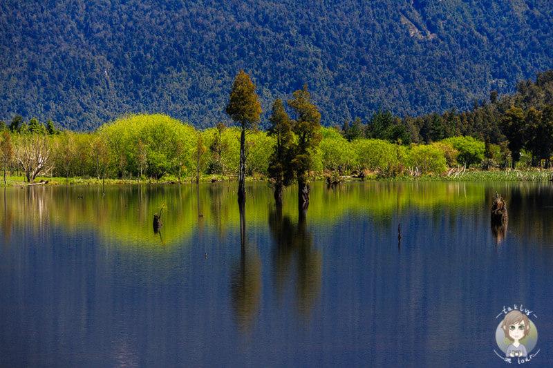 Spiegelung im Lake Poerua, West Coast, Neuseeland