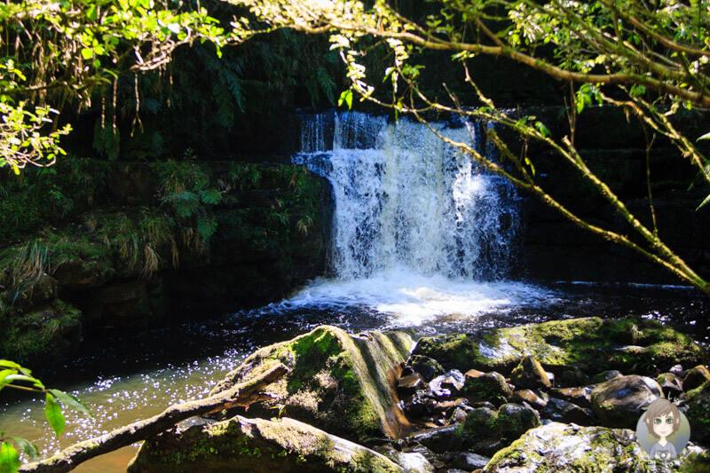 die 22 Meter hohen McLean Falls sind nur zum Teil sichtbar
