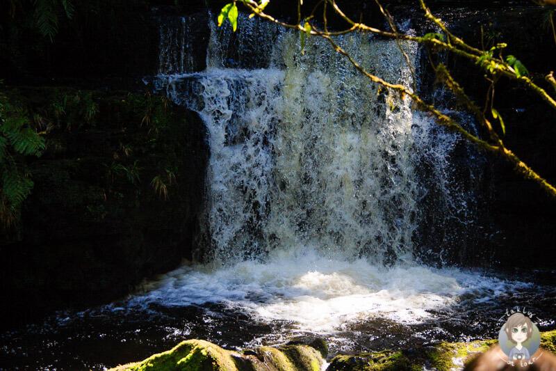 die McLean Falls sind stark durch Bäume verdeckt