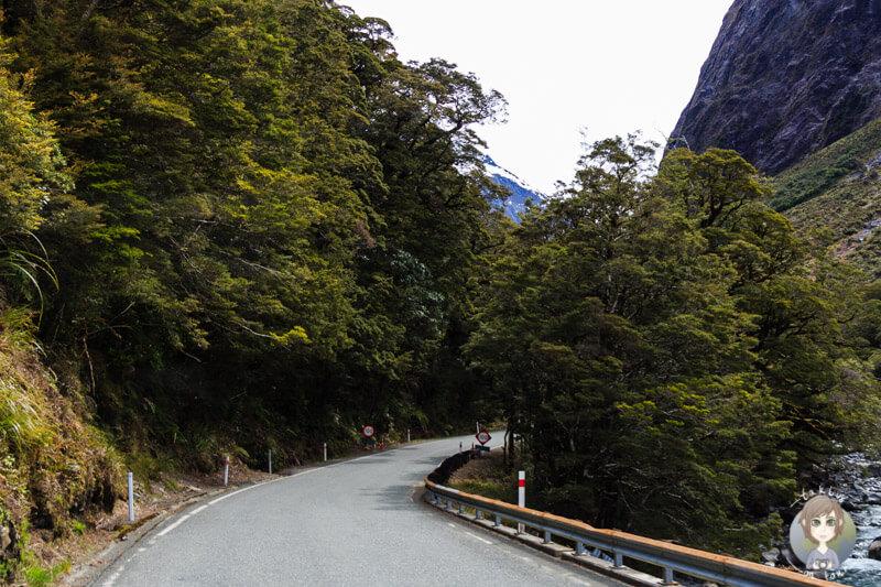 Milford Sound Highway, Fiordland National Park (1)