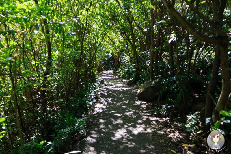 Ohau Stream Walk, Neuseeland