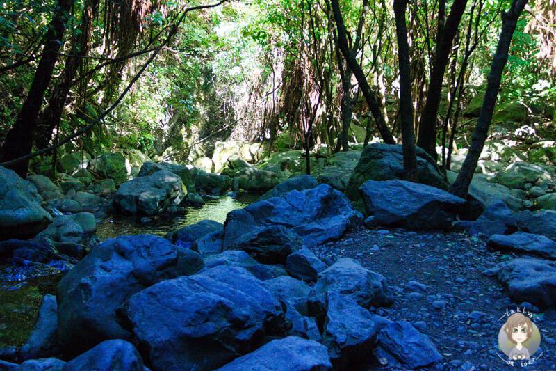 Der Ohau Stream mitten im Wald, Kaikoura, Neuseeland