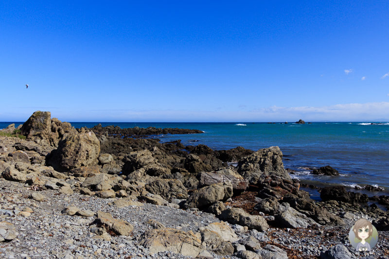 Paparoa Point (2)
