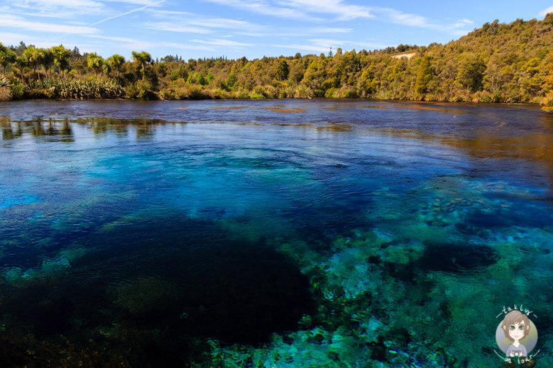 Die Pupu Springs im Abel Tasman nationalpark