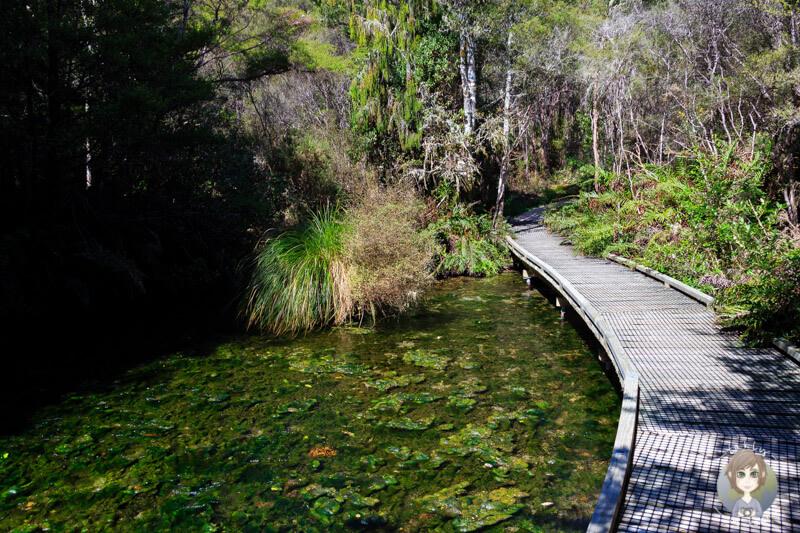 Schöner Walk bei den Te Waikoropupū Springs