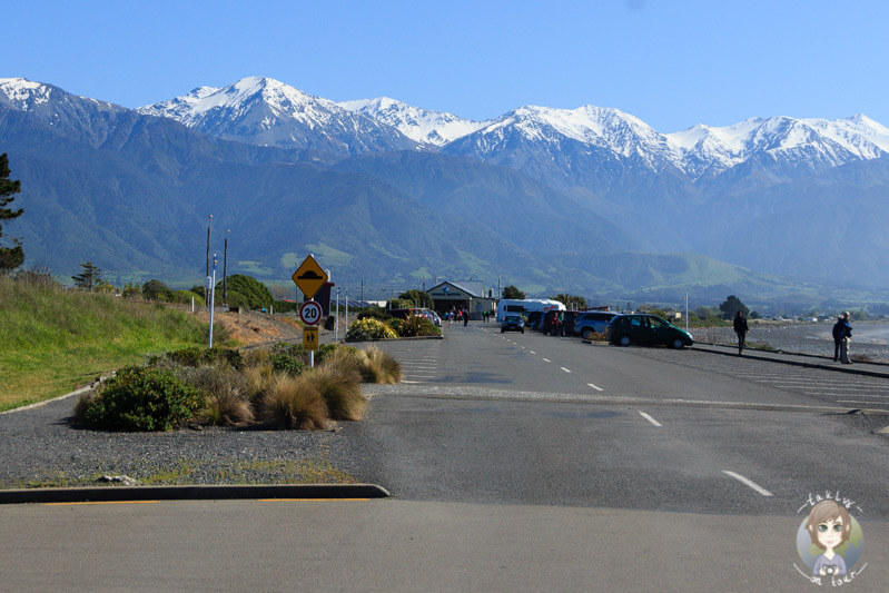 Whale Watching Center in Kaikoura