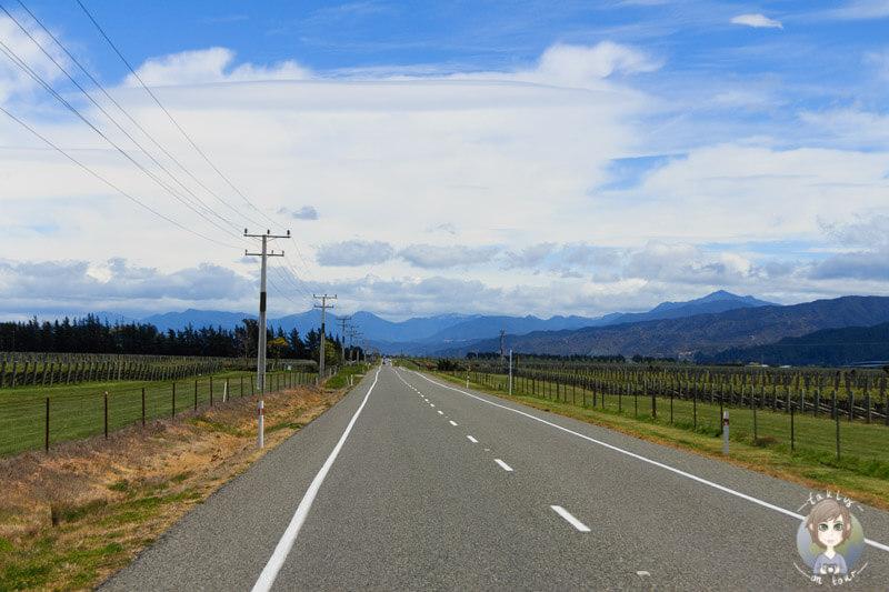 Region Marlborough, Südinsel Neuseeland (3)